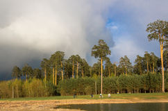 Before the storm. In the forest Stock Photography