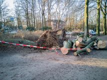 Storm in Hamburg trees overturned with cordon tape Feuerwehr Sperrzone German text for fire department restricted area.  royalty free stock image