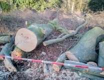 Storm in Hamburg trees overturned with cordon tape Feuerwehr Sperrzone German text for fire department restricted area.  royalty free stock images