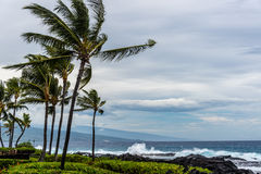 Storm in Hawaii. Blue ocean and wind in palm trees Stock Images