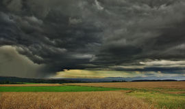 Storm hits. Dark clouds above grain field Stock Photography