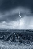 Storm hits the vineyard Royalty Free Stock Photos
