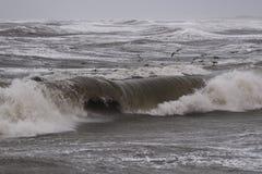 Storm i Nr Vorupoer på Nordsjönkusten i Danmark Royaltyfri Bild
