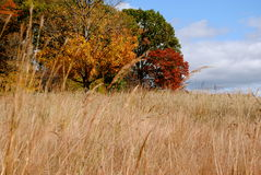 Storm King Meadow. At sculpture park in the Fall royalty free stock photography