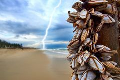 Storm with a lightning at the beach with mussels on a bamboo stick. Storm with a lightning at the beach with mussels on a bamboo stick Royalty Free Stock Photos