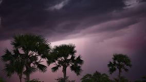 Storm and lightning in the jungle. stock video footage