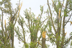 Storm loss, destroyed trees Stock Photography