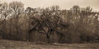 Storm Niklas Royalty Free Stock Photography