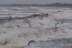 Storm in Nr. Vorupoer on the North Sea coast in Denmark Stock Images