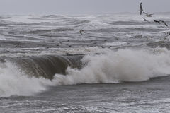 Storm in Nr. Vorupoer on the North Sea coast in Denmark Stock Photo