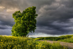 Before the storm. Ominously dark sky over the landscape with a lime tree Stock Photos