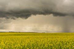 Storm Over Canola Stock Photos
