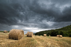 Storm over cereal field Royalty Free Stock Images