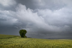 Storm over cereal field Stock Images