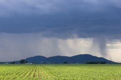 Storm over corn field Stock Image