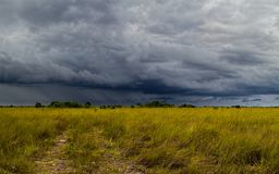 Storm Over the Everglades. Beautiful landscape in the part of the Florida Everglades called Chekili during a severe summer storm. Chekili is closed to the public Royalty Free Stock Photos