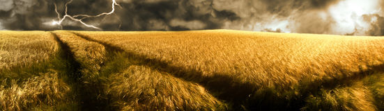 Storm over a golden  barley field. A thunderstorm over a golden illuminated barley field. sun is breaking through the dark clouds Royalty Free Stock Photo