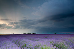 Before the storm. Storm over lavender field during sunset Stock Photo