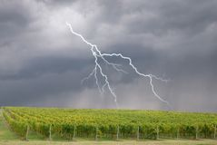 Storm over the vineyard Stock Image