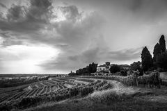 Storm over the vineyard Stock Images