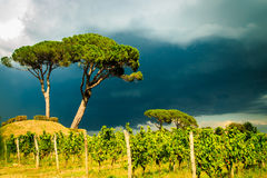 Storm over the vineyard Stock Photography