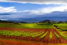 Storm over vineyards. Vineyards of Napa Valley in stormy weather in the spring Royalty Free Stock Images