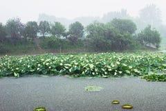 Storm rainning Stock Photography