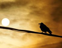 After storm, raven on a wire looking into the sunset Stock Photo