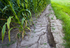 Storm runoff in corn field Stock Photos