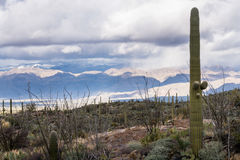 Storm by Saguaro National Park Tucson royalty free stock photo