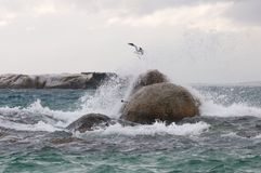 Storm sea bird Stock Photo