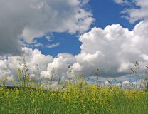 The storm sky. Field with a green grass before a thunder-storm Stock Images