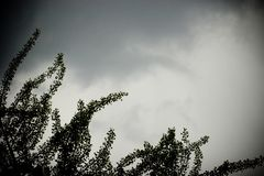 Storm sky and tree. Storm sky with dark clouds and trees Stock Images
