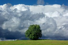 Storm and solitary tree. Solitary tree and huge thunder-clouds Royalty Free Stock Image