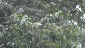 Storm. Y wind with rain in the treetop stock video