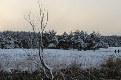 After the storm a strong frost frosted pine forests of the Carpathians in Ukraine Royalty Free Stock Images