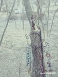 Storm struck tree. Wind chimes  on rod Stock Photography