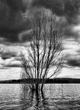 Storm tree. A tree submerged in a lake with dark clouds looming Stock Photo