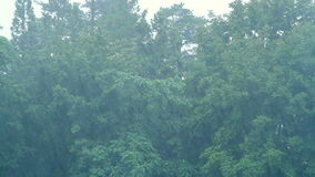 Storm wind blowing trees. Strong wind shakes the branches of trees in heavy rain stock video footage