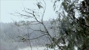 Gusts of heavy wind on trees during storm. Storm winds blow pine boughs in a rain storm stock video footage