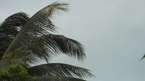 Storm winds blowing palm trees on tropical island. Storm winds blowing palm trees Stock Photography