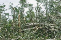 Storma följder i staden av Minsk 13 07 16 Royaltyfri Bild