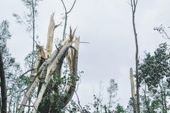 Storma följder i staden av Minsk 13 07 16 Arkivfoton