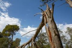 Storma skada och det brutna trädet i skogen arkivfoto
