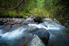 Stormachtig water van een bergrivier in de bos Selectieve nadruk Royalty-vrije Stock Afbeelding