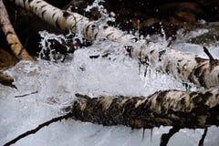Stormachtige bergrivier Uitbarstingen van water De gevallen boomstammen van berkbomen liggen in de rivier royalty-vrije stock foto's