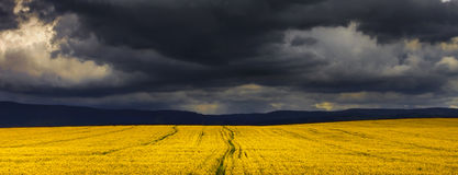 Stormachtige canolagebieden Royalty-vrije Stock Afbeelding