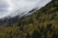 Stormachtige hemel en dalingsbladeren Royalty-vrije Stock Foto's