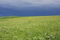 Stormachtige hemel over groen gebied Royalty-vrije Stock Fotografie