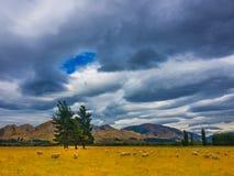 Stormachtige hemel over schapenland Stock Afbeeldingen